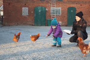 Tierfütterung waldhof bruchmühle outdoor