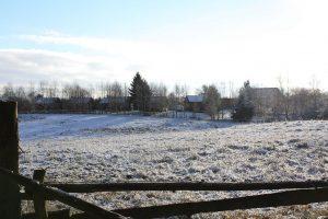 Waldnester-im-Winter waldhof bruchmühle